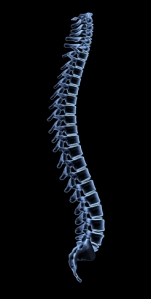 diy-spine-image