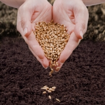 Seed or Soil